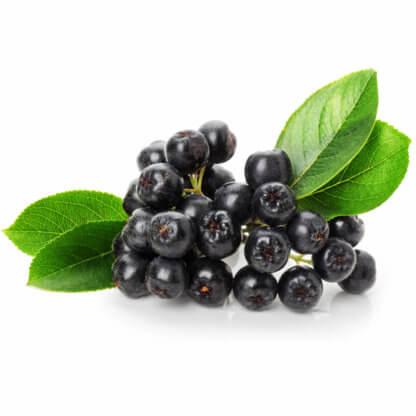 Aronia, Antioxidant, bestellen, natur, Schweiz, Switzerland