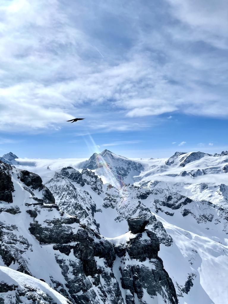 Berge, Aussicht, Vogel