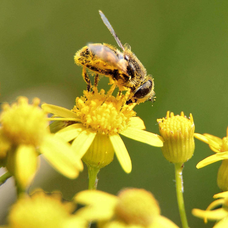 polen schweiz online