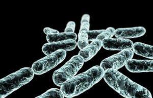 Probiotika kaufen