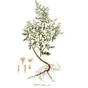 Artemisia Creme kaufen