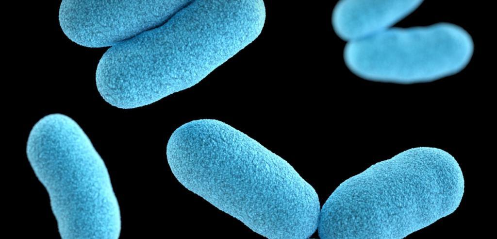 Milchsäurebakterien, Probiotika