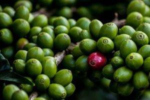 Grüner Kaffee in Kapseln kaufen - Coffea Vida