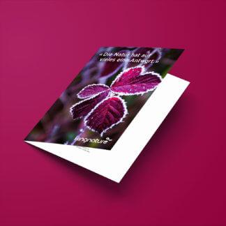 kingnature-geschenkgutschein-CHF20-online-kaufen-schweiz-web-c